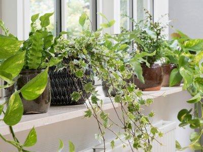 Stueplanter i ferietiden