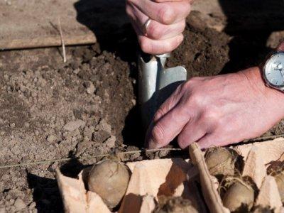 Kartofler til alle