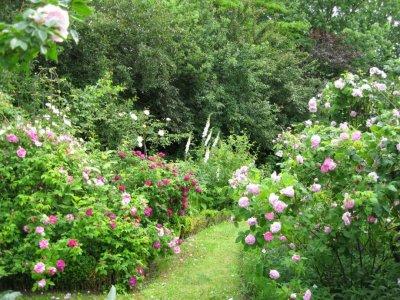 Roser - plantetid