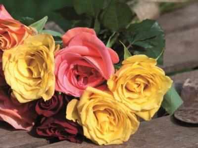 Havens roser