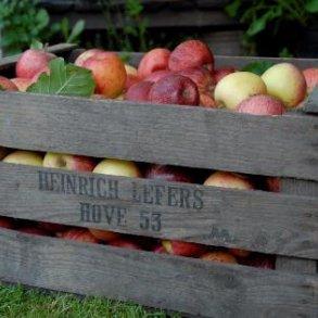 Frugt og bær/nyttehaven